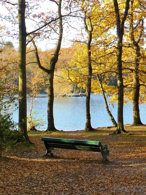 Bench at Bracebridge pool, Sutton park, Sutton Coldfield, England