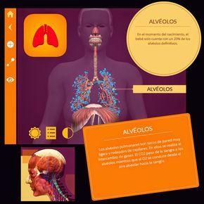 PROYECTO #GUAPPIS: El cuerpo humano en Realidad Aumentada con Arloon Anatomy