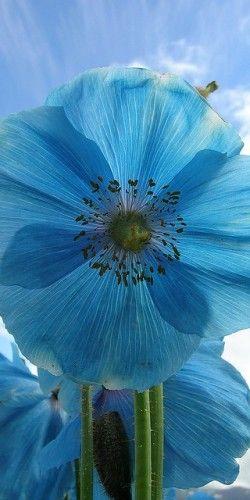 {Blue}