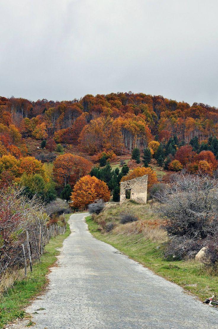 532  Colori d'Autunno, Sila Cosentina (Cosenza) Calabria foto di Andrea Marinaro