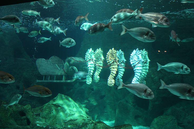 Thalassocosmos aquarium, Gournes, Heraklion Crete, Greece.
