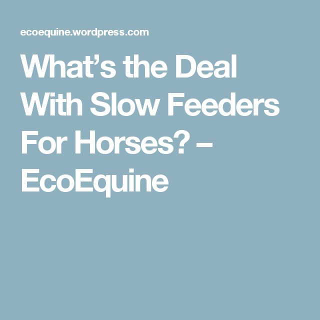 What's the Deal With Slow Feeders For Horses? – EcoEquine