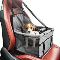 My Review of a Small Dog Car Seat | Love Toy Dogs