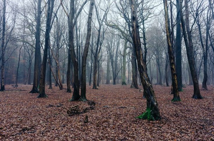 Fog in woods free high-resolution photo about Landscape Nature autumn background Beginning black blue cold dark Dark forest dusk europe evening fall fantasy Fantasy forest fog foggy forest germany ground landscape leaves magic mist misty mood morning mystery nature rain rainy scary silhouette soft spooky tree trees weather winter wood woods