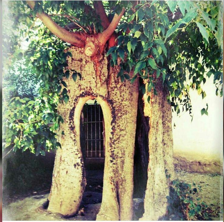 ARCIMBOLDA ~   CLICK FOR DETAIL   #Italy #italia #santacroce #summertime #paradise #lamole #campagna #cibo #foodandwine #bright #colors #shimer #glow #natur #trees #green #chianty #story #history #sundayfunday #rinascente #beautifulday #lifestyle #blogger #ibelieveicanfly #flowers #sunny #love #hope