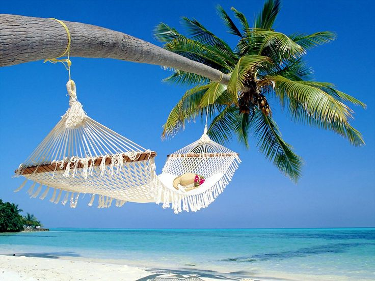 Hamac & Palm Tree + Beach + Sea