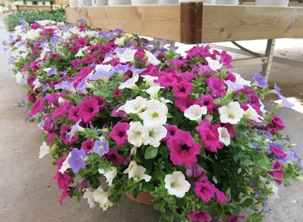Las mejores plantas para terrazas de sol