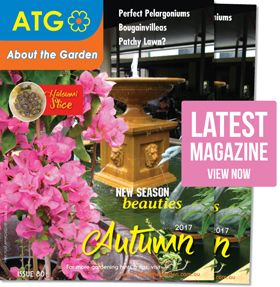How to plant and grow bougainvilleas | About The Garden Magazine