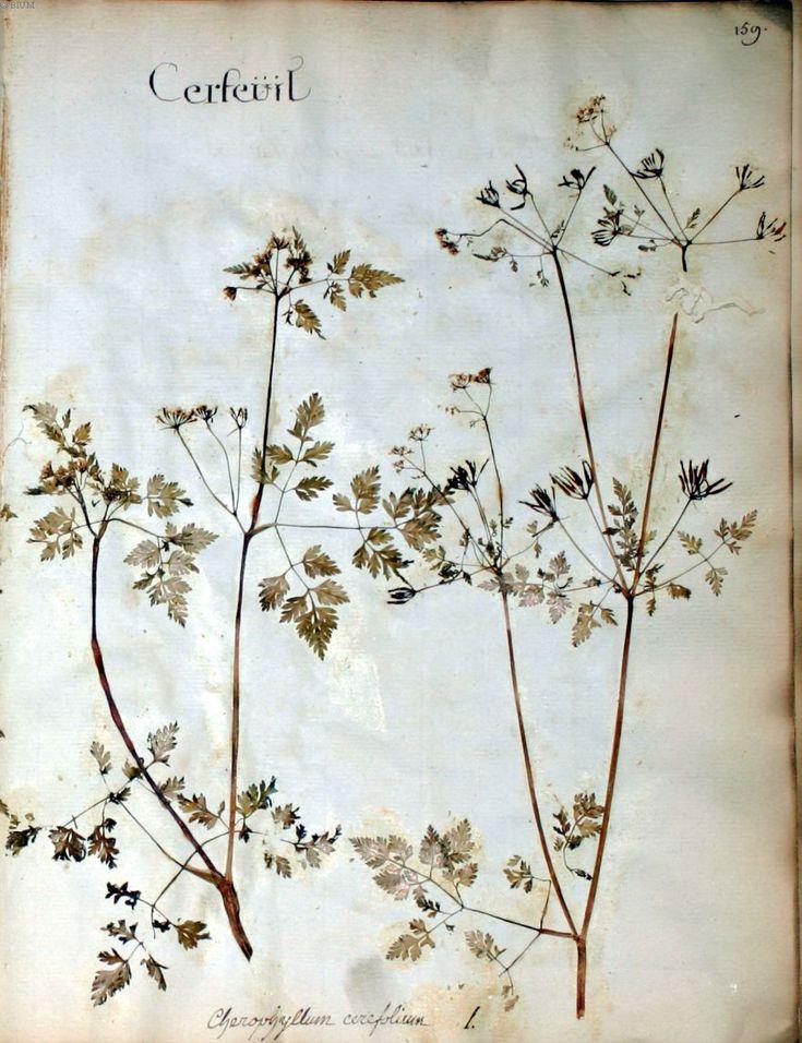 les 25 meilleures idees de la categorie herbier sur With affiche chambre bébé avec fleurs d aubépine tisane