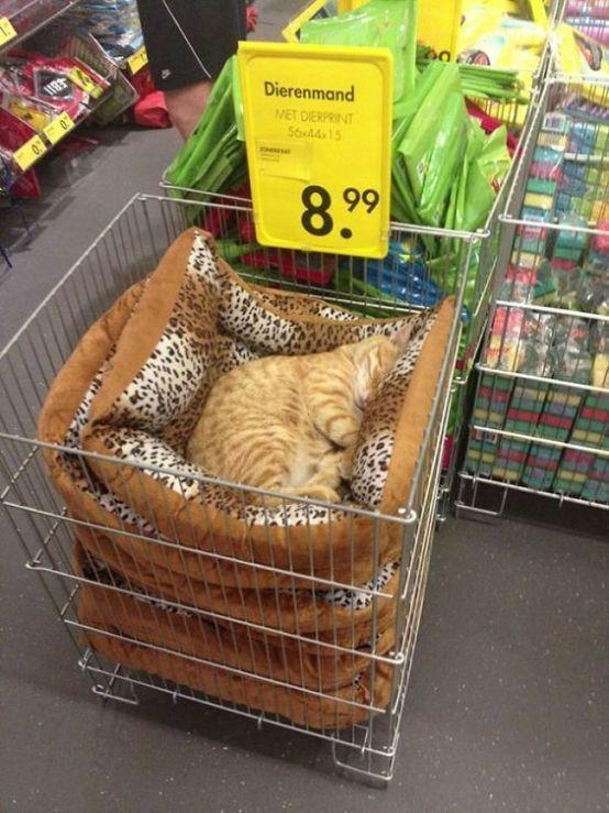 Gatos perezosos divertidos que pueden dormir en cualquier momento en cualquier lugar 5