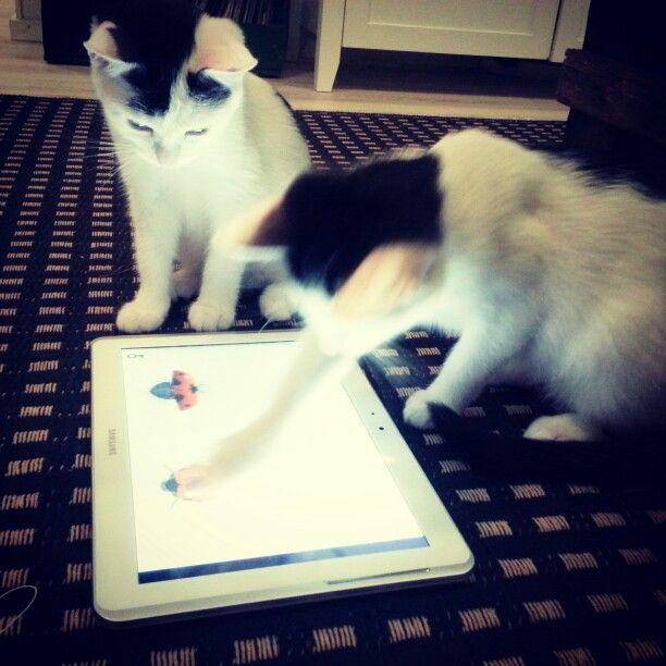 kittens playing #kittens