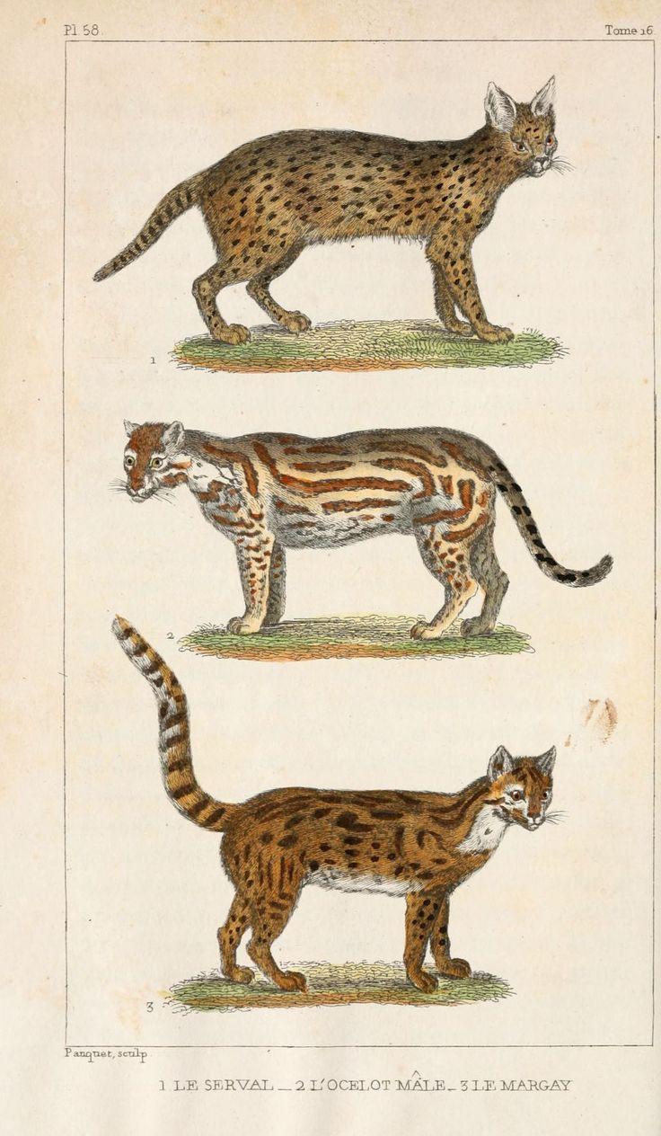 53 best menagerie images on pinterest antique prints - Animal dessin ...