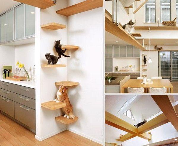 9- Prateleiras estrategicamente colocadas para o acesso dos gatos