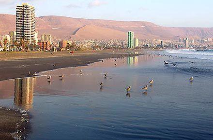 Pájaros en la playa, Iquique