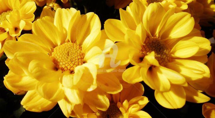 Bem vindo ao meu universo de flores e arquitetura !         No desenho, na pintura e na fotografia. Janir S.Duarte Galeria de Arte on-line