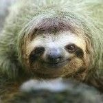Baby Sloth Orphanage Rescue Center – Behind the Scenes