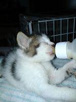 Rona-roni E-Man Dhani: Memelihara anak kucing yatim piatu
