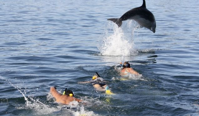 Paihia Swim with Dolphins - New Zealand Sightseeing - Featured Activities