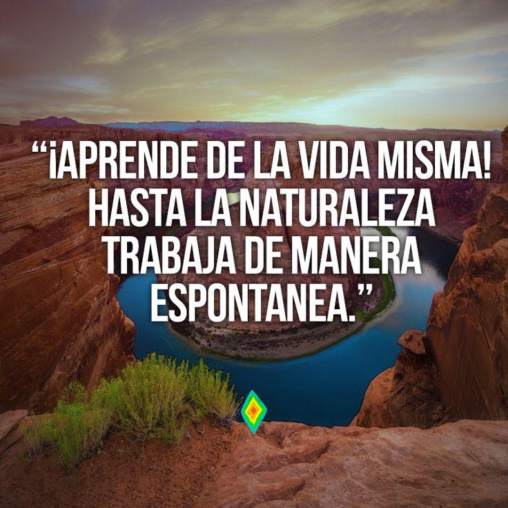 Aprende de la vida misma, hasta la naturaleza trabaja de manera espontanea.