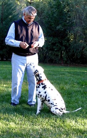 Caring Pet Service: Animal and pet cremation services in santa clara county, bay area, creamation