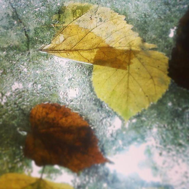 autumn view through window at wonderful workshop location In De Ruimte   #autumn #outside #painting #workshop #inside #lovemyjob❤️ #nature #leafs #rain #oudegracht #utrecht #thenetherlands #girl #me #artist #artteacher #love #fun #daylight #magic #yellow #color