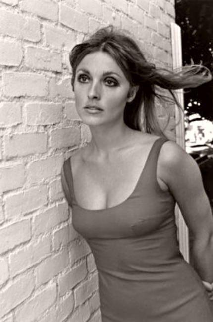 Sharon Tate (1967) Photo by Curt Gunther   ♥ Sharon Tate ♥   Pinterest   Photos and Sharon tate