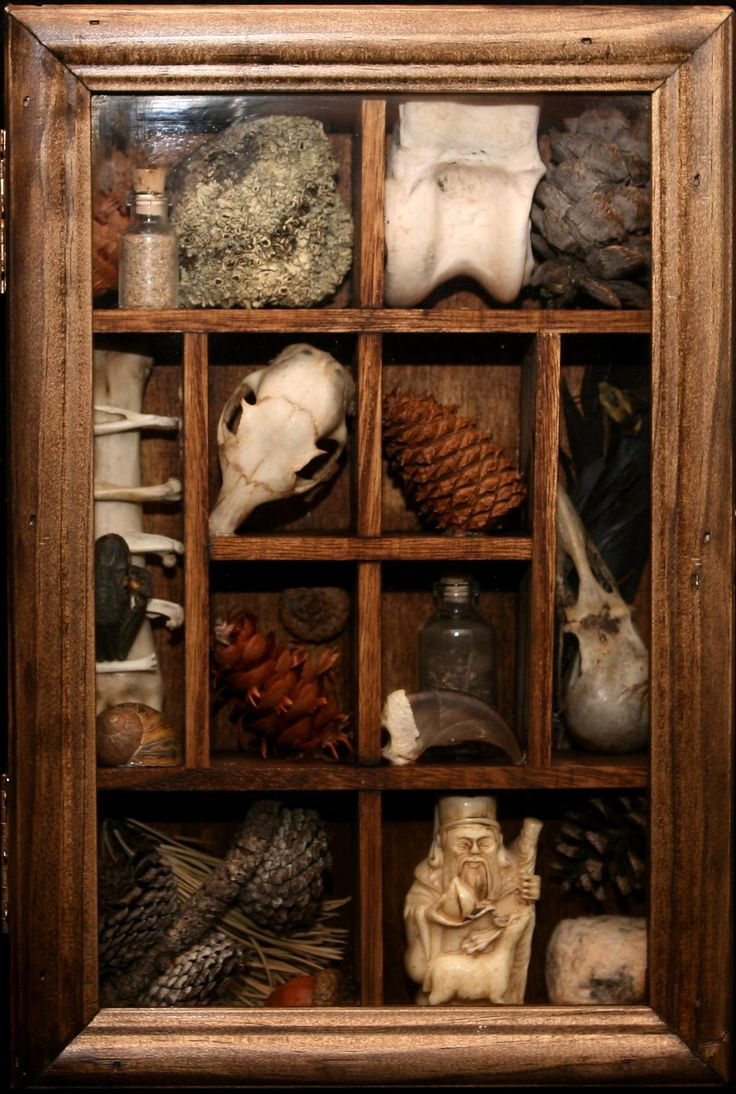 1000 Ideas About Cabinet Of Curiosities On Pinterest