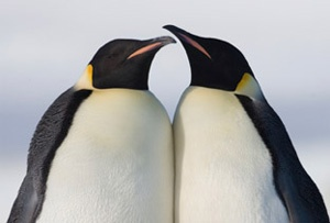 Check this website out to adopt a penguin! :)  (other animals can also be adopted)