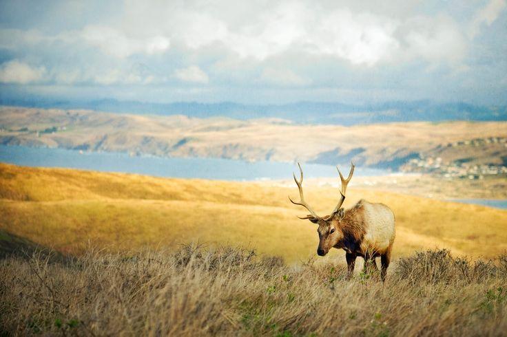 обои оленьи рога, склон, долина, трава