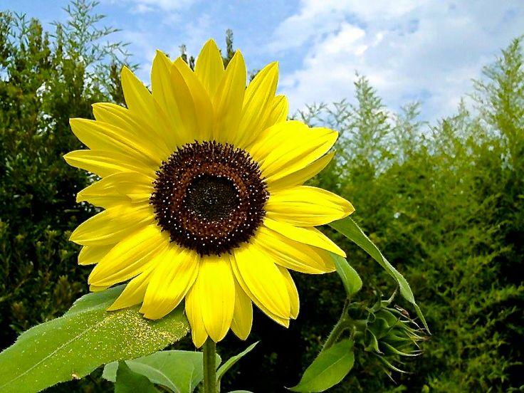 Pinterest Flowers: Happy Flowers