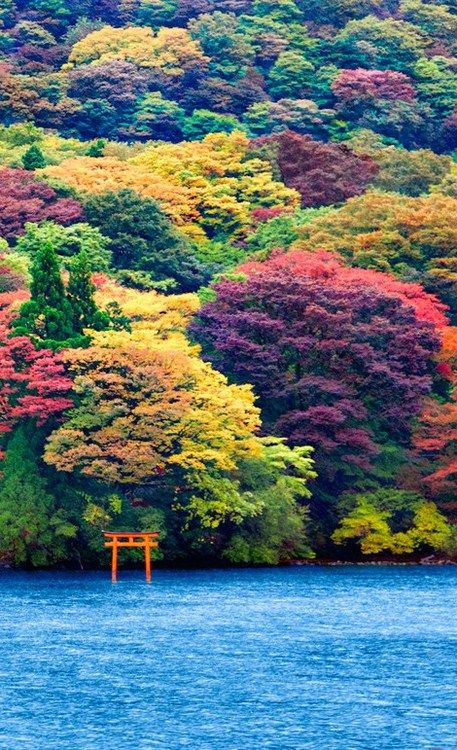 Ashi Lake, Japan it must be the trees [types of - ]!                  i don't think this picture could be matched, for color explosion!!