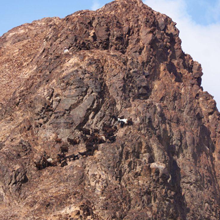 Mount Uhud is a mountain north of Medina, Saudi Arabia. It is 1,077 m high. It was the site of the second battle between Muslim and Meccan forces.  #islamicdaily #islamicreminder #islamicquote #muslimah #muslimreminder #madina #islam #salah #deen #makkah #dubai #islam #hijab #hijabfashion #hadith #islamicshare #muslims #sunnah #instamuslim #religion #qatar #doha #namaz