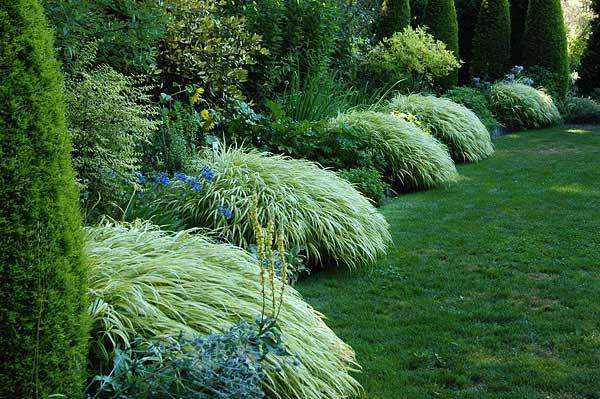 Ornamental grass..HakonechloaGardens Ideas, Japan Forests, Shady Garden, Perennials Plants, Gardens Border, Ornaments Grass, Forests Grass, Shades Gardens, Gardens Plants