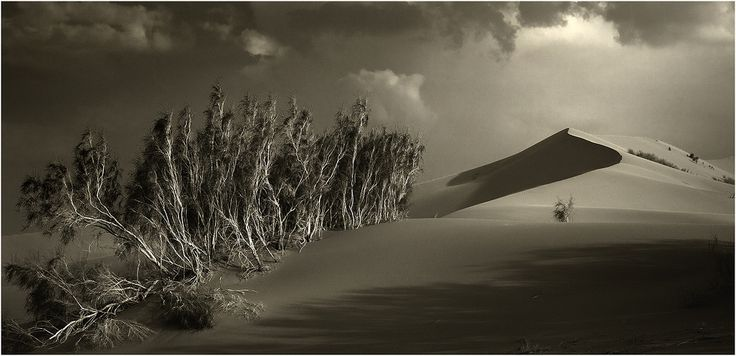 #пейзаж #дюна #свет #саксаул #чишко Photographer: Чишко Василий