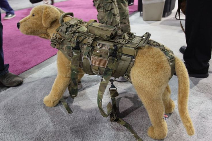 If you're gonna bring your dog.. might as well have them carry some gear!