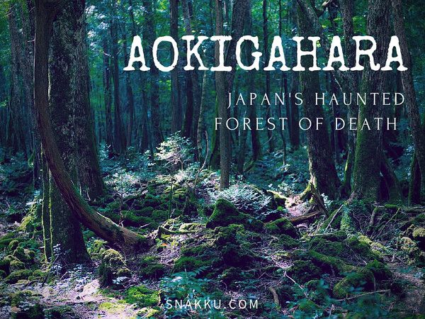 It's considered one of the most haunted and eerie places in Japan. Thousands of people have gotten lost or died in this forest. But that's all the more reason to go... just bring a buddy! In this post, we take a look at Aokigahara (青木ヶ原).