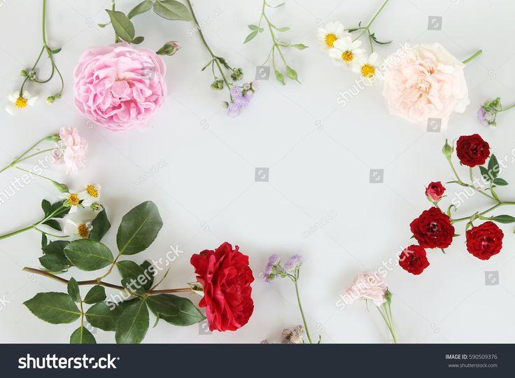 Beautiful English rose for background