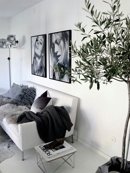 Black/white photos on thw wall, olivetree, spotlight...love