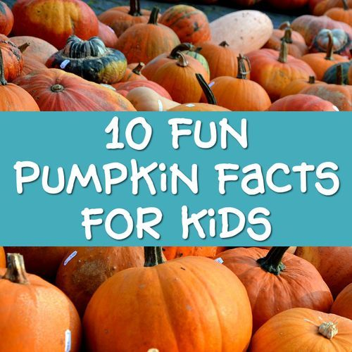 10 Fun Pumpkin Facts for Kids, Cool Information, Fun Trivia for Children and Adults to Learn and Discover