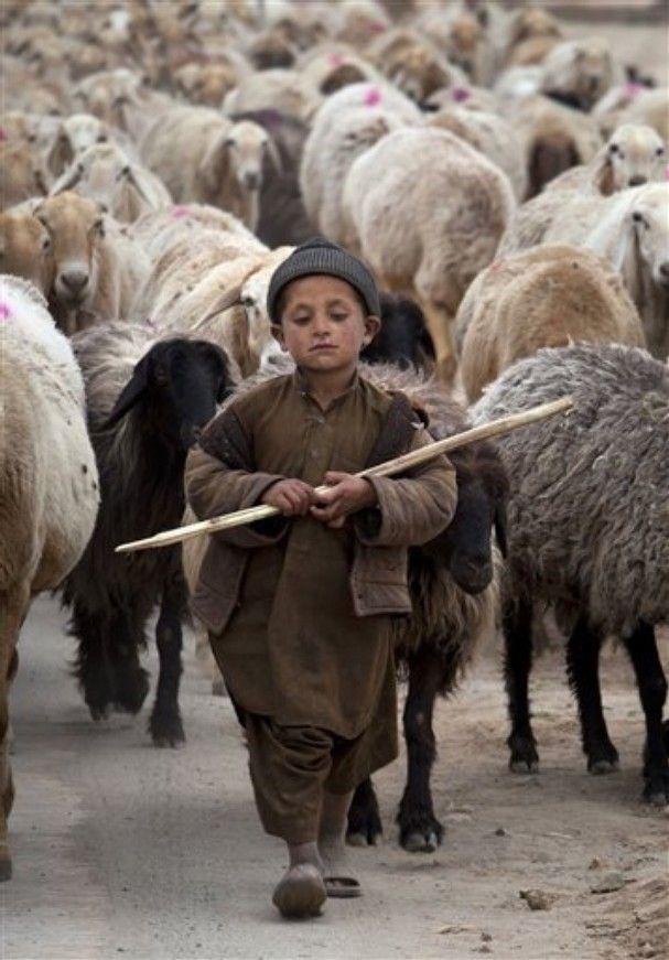 Al frente de todos esos seres, con gran seriedad. Maravilloso! A young Pakistani shepherd escorts his herd in suburbs of Islamabad, Pakistan (AP Photo/B.K. Bangash)