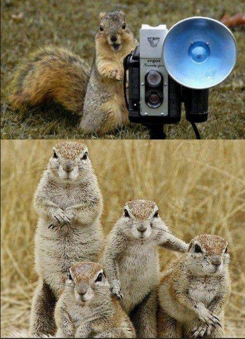 Family photo: Picture, Animals, Squirrels, Family Portraits, Family Photos, Funny Animal, Families, Smile
