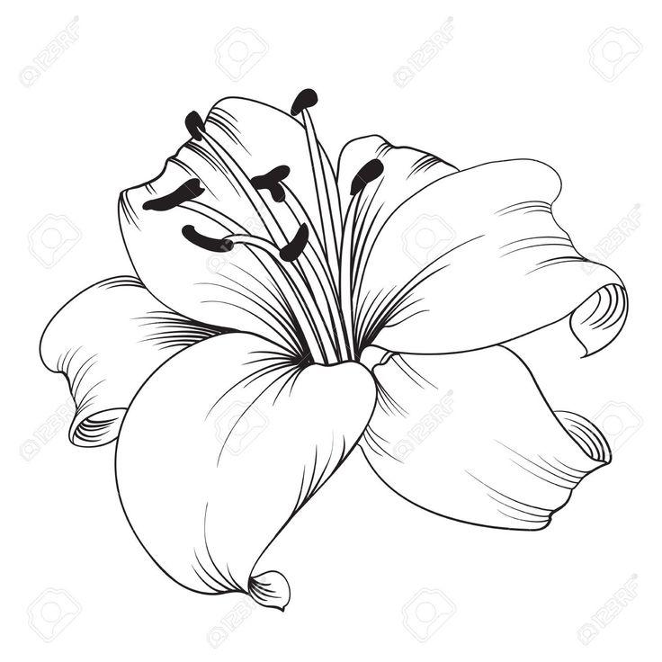 Blumenzeichnungen