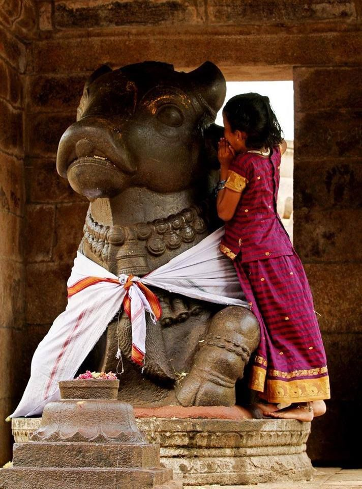 A young Nandi worshipper. Credit: Meena Rakesh Place: GangaiKonda Cholapuram, Tamil Nadu