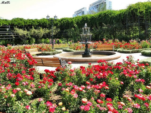 Jardin de rosas    Parque Araucano  Santiago de Chile