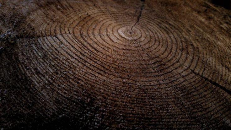 Quarter Sawn Vs Flat Sawn Oak  The Ultimate Guide