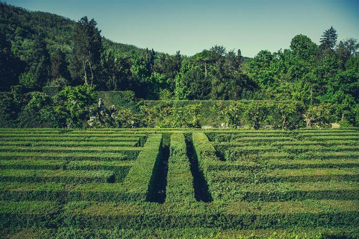 Il labirinto di Valsanzibio è stato realizzato con seimila arbusti di bosso sempreverde (Buxus Sempervirens). La maggior parte di queste piante sono secolari (hanno quasi 400 anni) e sono state piantate tra il 1664-1669 quando il giardino di Valsanzibio è stato creato e portato all'attuale fisionomia. L'intero percorso del labirinto, lungo circa un chilometro e …