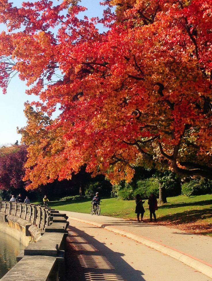 Autumn colours--Vancouver, BC