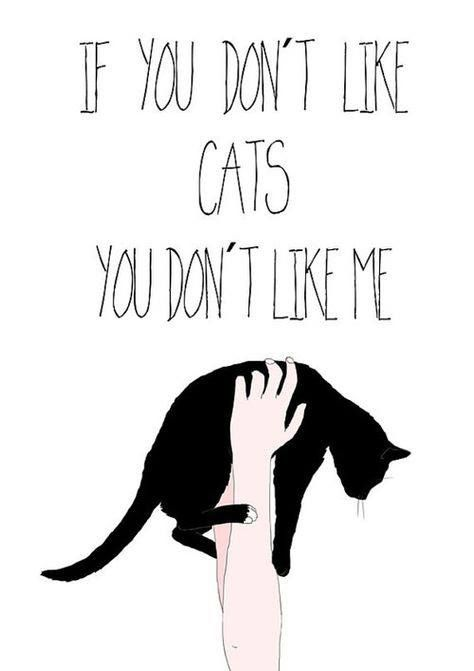 Ok if you don't like cats, I don't like you!