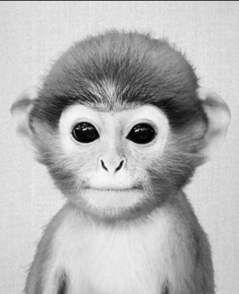 Google Image Result For Https Heightzone Com Wp Content Uploads 2020 08 E4c130396c1c9886e8a6d9962c3a9d Jpg Black White Art Metal Art Prints Baby Monkey