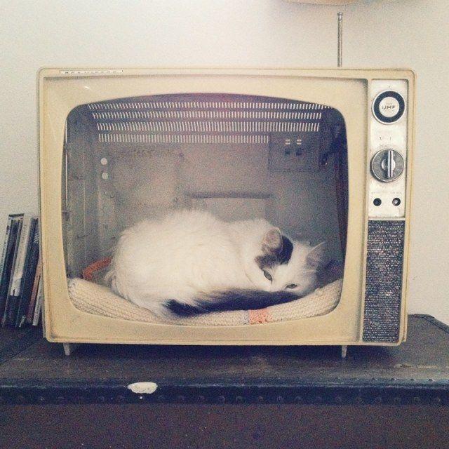 DIY bed for your cat! Easy breezy! <3 #diy #pets #cat #tv